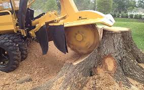 Stump Removal Oldham Greater Manchester