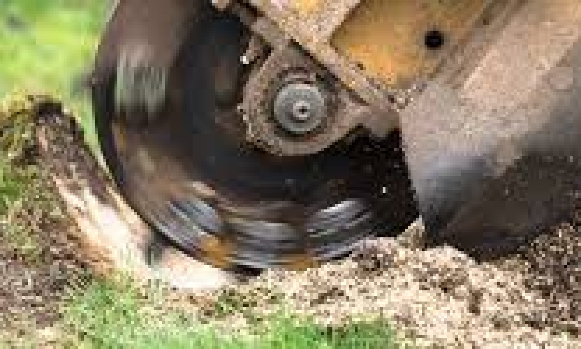 Stump Removal Greater Manchester